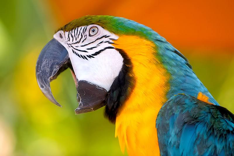 Q Significa Parrot Lo  arbitrario  significa una