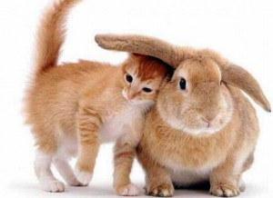 anticoncepto gato por liebre