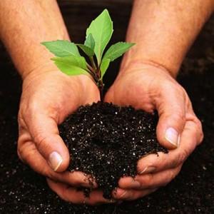 planta donaciones tierra